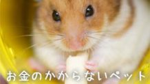 お金のかからないペットおすすめ6種!癒しをくれる小動物