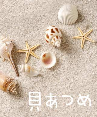 お金のかからない貝殻コレクション